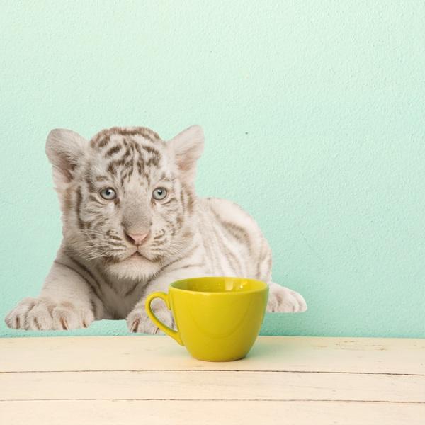 Adesivo murale cucciolo di tigre bianca stickersmurali.com