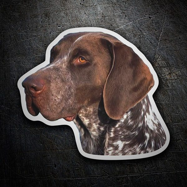 Adesivi per Auto e Moto: German Shorthaired Pointer