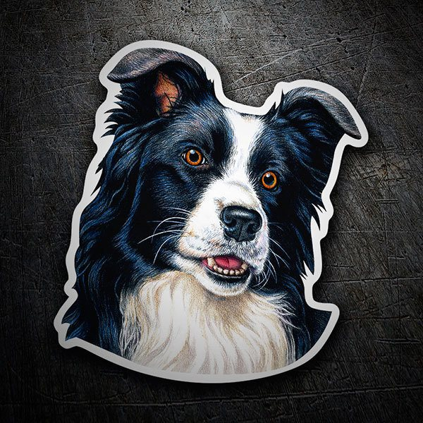Adesivi per Auto e Moto: Border Collie