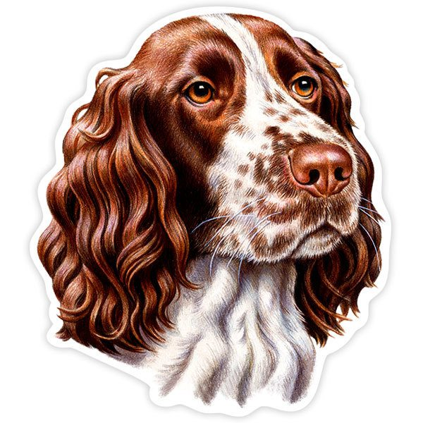 Adesivi per Auto e Moto: English Springer Spaniel
