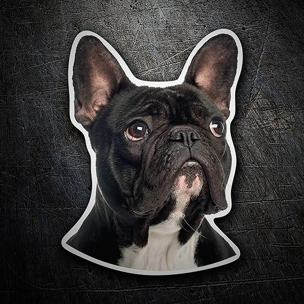 Adesivo cane bulldog francese stickersmurali.com