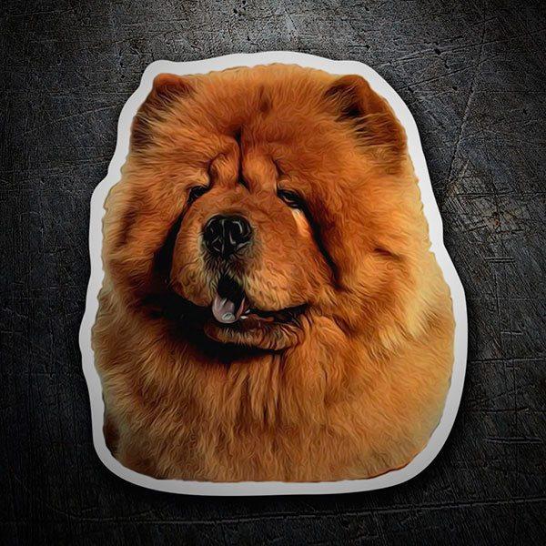 Sfondi cani chow chow