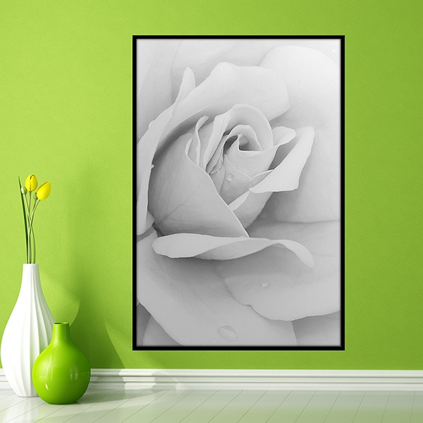 Adesivi Murali: Picture white Rose