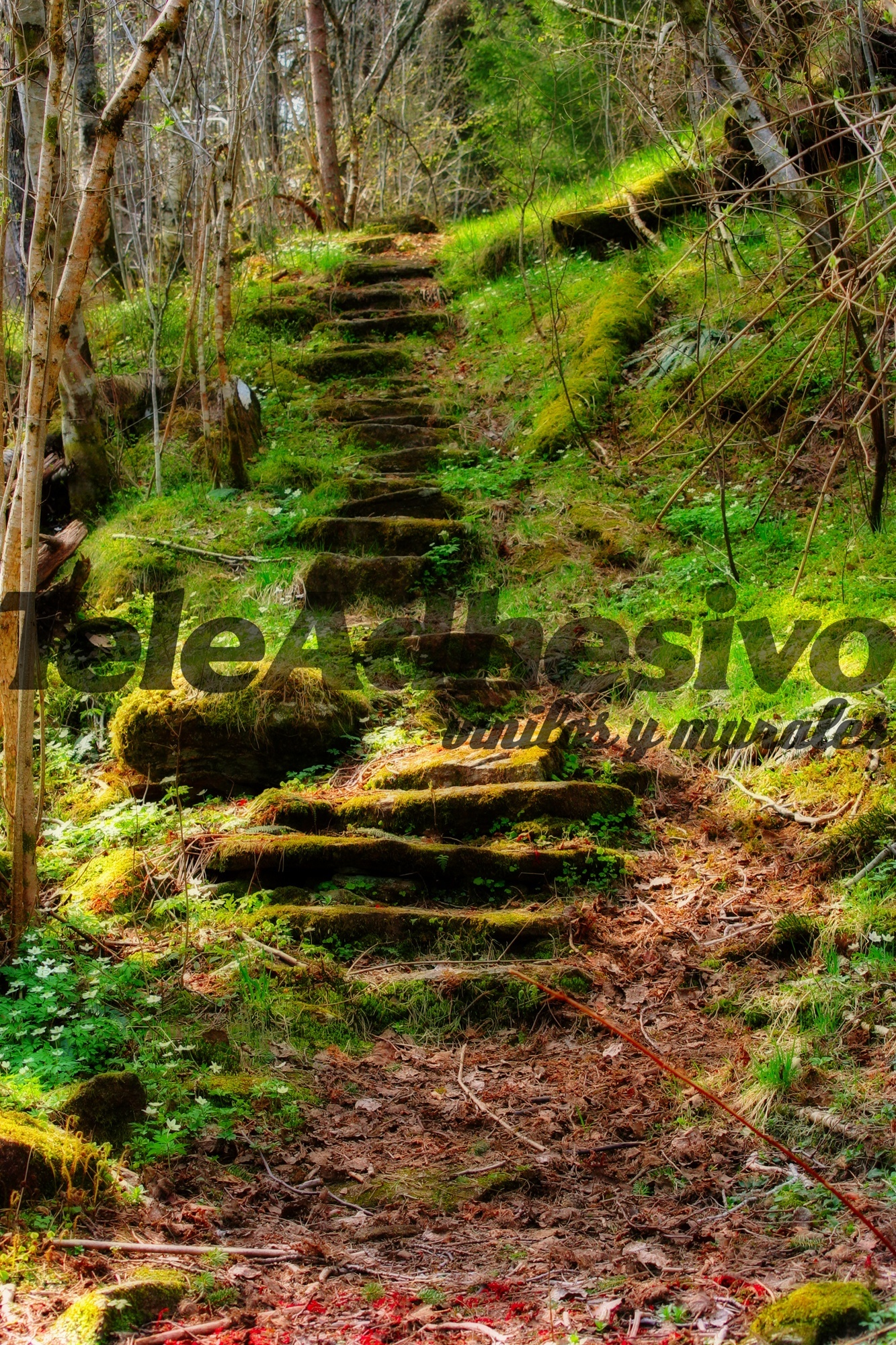 Fotomurali foresta scale