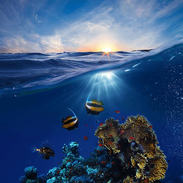 Fotomurale coralli dei fondali marini for Immagini coralli marini